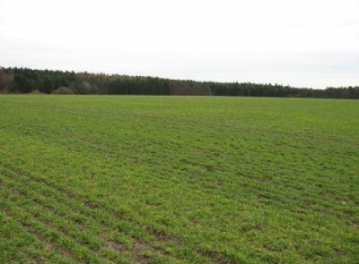 Steinborn Bauernhöfe, Landwirtschaft, Steinborn Forstwirtschaft