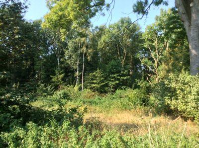 Bild 17 Blick vom Bauplatz in den Wald