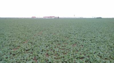 Calarasi Bauernhöfe, Landwirtschaft, Calarasi Forstwirtschaft