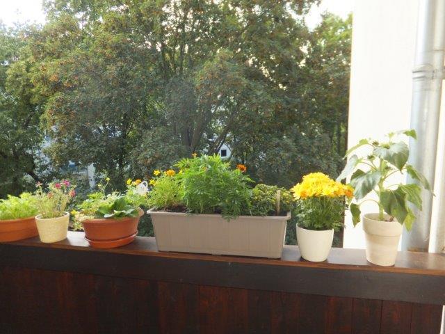 TOP : Elegante 3-Zimmer-Wohnung mit Balkon und Aufzug in ruhiger, grüner Lage im Herzen von Gohlis