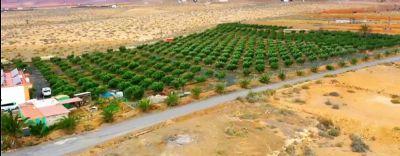 Tuineje Bauernhöfe, Landwirtschaft, Tuineje Forstwirtschaft