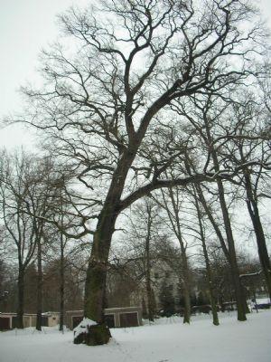 Außenbereich mit Baumbestand
