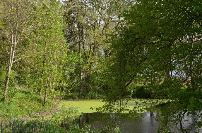 6 601m² Wassergrundstück mit Teich