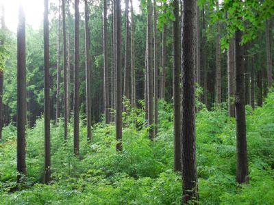Kipfenberg Bauernhöfe, Landwirtschaft, Kipfenberg Forstwirtschaft