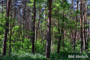 Wald (Abb. ähnlich)