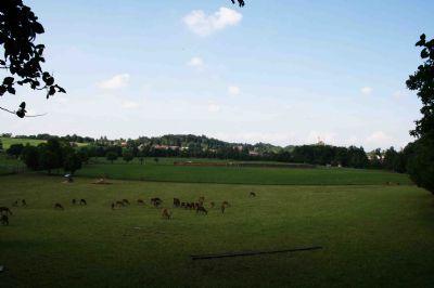 Blick vom Wildgehege zum Dorf zurück...