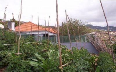 wohnen auf der blumeninsel einfamilienhaus madeira 2ahva4y. Black Bedroom Furniture Sets. Home Design Ideas