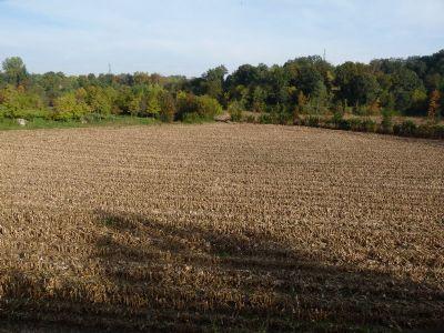 Monzambano Bauernhöfe, Landwirtschaft, Monzambano Forstwirtschaft