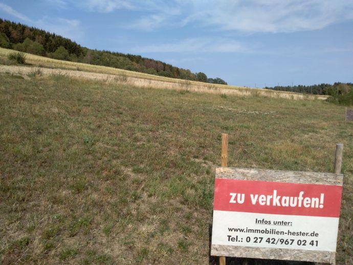 Bauplatz ca. 519m² in Molzhain zu verkaufen