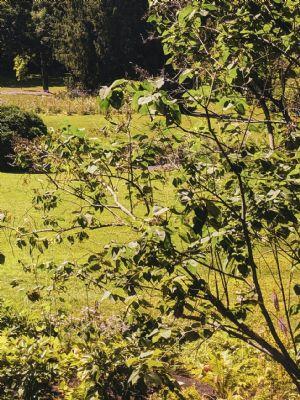 Wels(Stadt) Grundstücke, Wels(Stadt) Grundstück kaufen