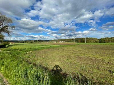 Sulzbach-Rosenberg Bauernhöfe, Landwirtschaft, Sulzbach-Rosenberg Forstwirtschaft
