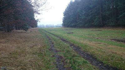 Kleßen Bauernhöfe, Landwirtschaft, Kleßen Forstwirtschaft