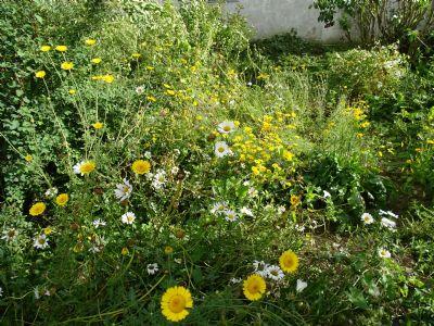 Blümchen im Garten
