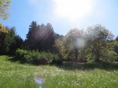 Waldflächen