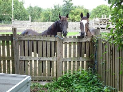 Viel Platz auch für die Pferde