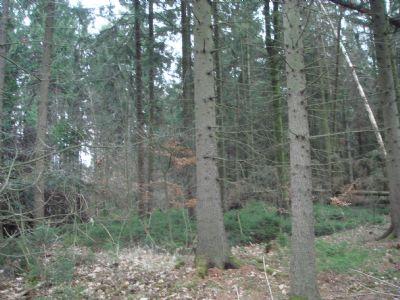 Wittingen Bauernhöfe, Landwirtschaft, Wittingen Forstwirtschaft