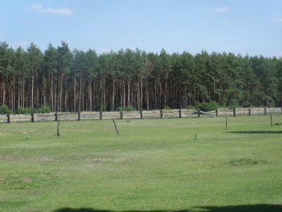 Blick auf Weideland und z.T. Wald zum Zukauf  (8)