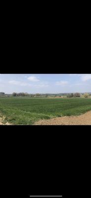 Stuttgart Bauernhöfe, Landwirtschaft, Stuttgart Forstwirtschaft
