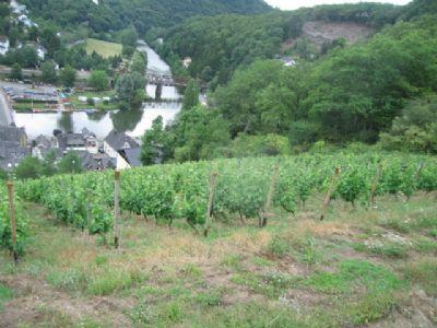 Baugrundstück im Weinberg mit Blick zum Kloster 1.776 qm