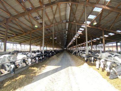 Hollnseth Bauernhöfe, Landwirtschaft, Hollnseth Forstwirtschaft