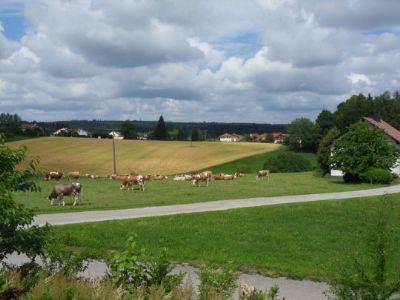 Wohnung Mieten Passau Und Umgebung