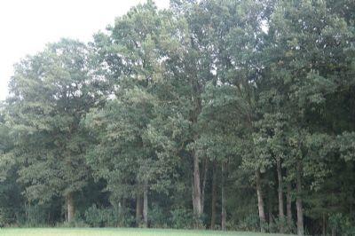 Waldbestandfoto
