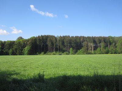 Blick nach Westen von Feldstadel