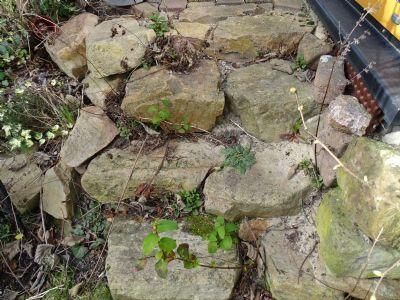Garten angelegt mit Natursteinen