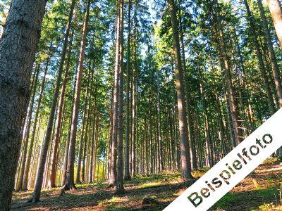 Land- und Forstwirtschaftsflächen bei Groß Schacksdorf
