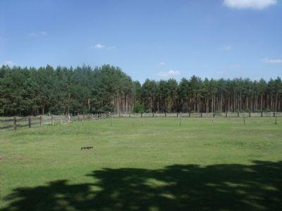 Blick auf Weideland und z.T. Wald zum Zukauf  (6)