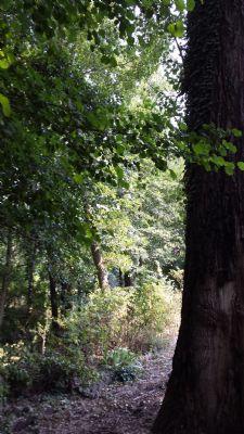 Alter Baum im Garten