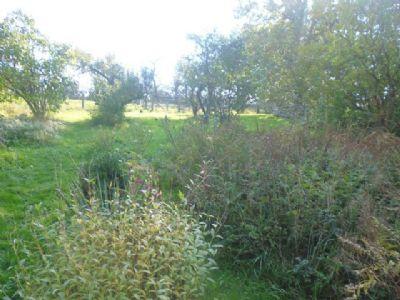 riesiges Garten-Grünland