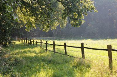 Ansicht Waldstück/ Pferdewiese