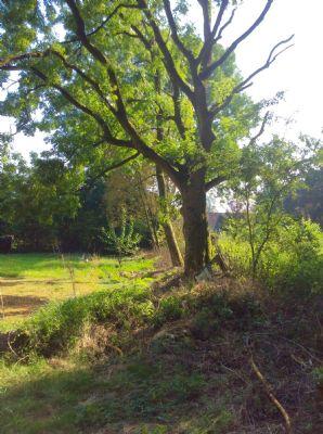 Bild 4 Grundstücksgrenze zum Reiterhof