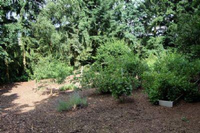 Garten im unteren Bereich vom Grundstück!