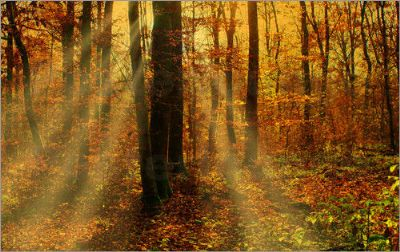 harmnischer Waldblick