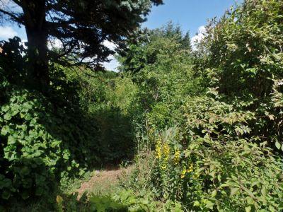 24-Blick-ins-Grundstück