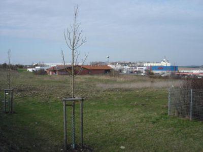 3 ebenes Grundstück
