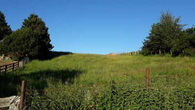 Sellin Bauernhöfe, Landwirtschaft, Sellin Forstwirtschaft