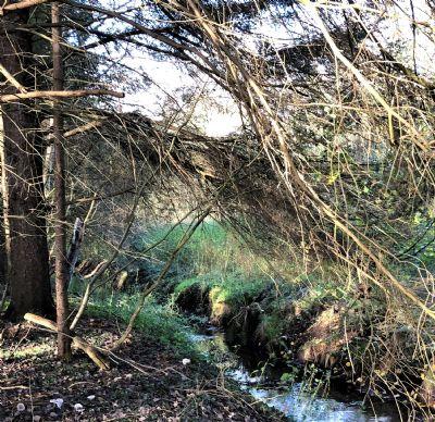 Waldgrundstück wildeshausen waldgrundstück mit großem teich kalaydo de