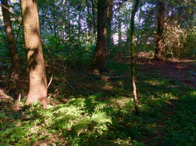 Bild 13 Waldweg