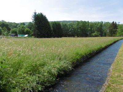 große Wiesenfläche entlang des Mühlbaches