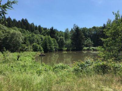 Fischteichanlage mit Bachlauf, Bienenhaus u. Geräteschuppen