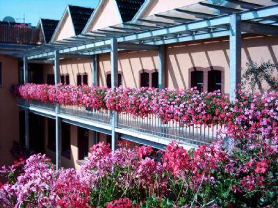 Blütenpracht in der Johann Neusch Passage