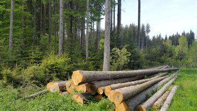 Östliche Waldgrenze