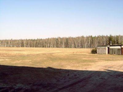 Blick zum Wald