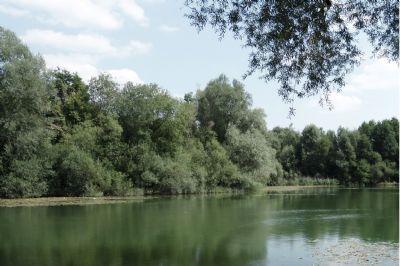 Umgebung mit viel Grün