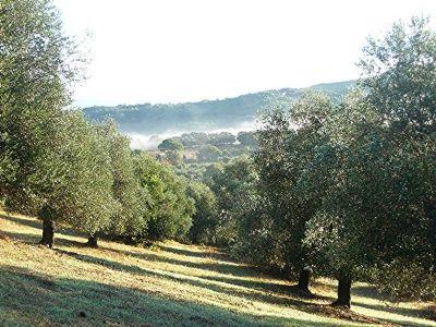 Caldana Grundstücke, Caldana Grundstück kaufen