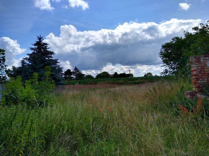 Günstiges Grundstück zum Verkauf mit kleineren Altbeständen / Property For Sale in/at LÖWITZ in Mecklenburg-Vorpommern