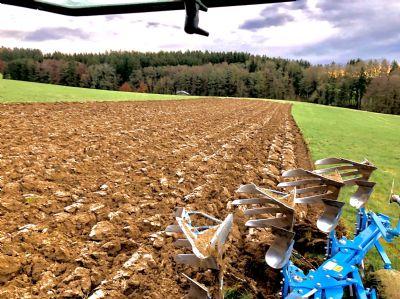 Mittelneufnach Bauernhöfe, Landwirtschaft, Mittelneufnach Forstwirtschaft